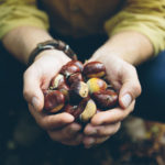 Man holding acorns picked from the forest floor