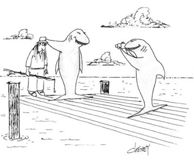 A shark on a fishing dock proudly displays his catch to his buddy: A confused fisherman. The shark friend takes a picture.