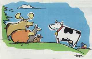 A group of forest animals talk to a cow on a hill side.