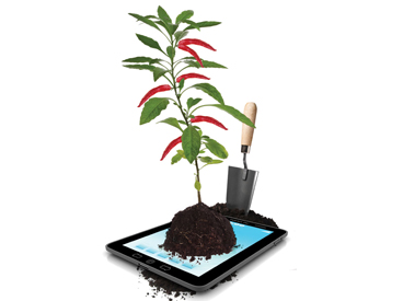 Plant growing out of iPad.