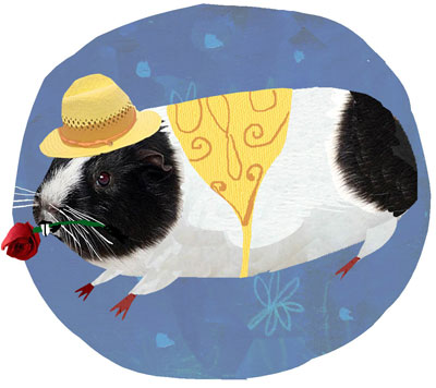 Guinea pig wearing a hat and carrying a rose in his teeth