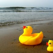 Rubber Duck Family on the beach