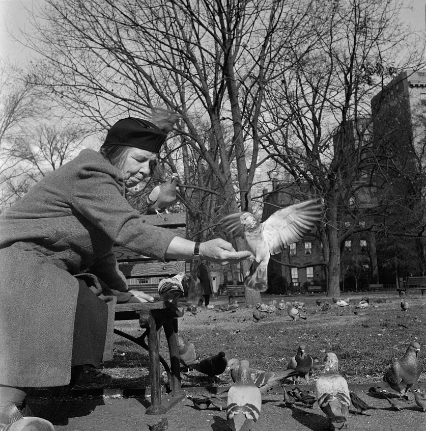 Feeding the pigeons in Lafayette Park. This woman has been bringing grain to the pigeons almost daily for thirteen years.