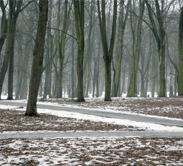 A crossroads in a snowy forest.