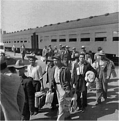 "Mexican migrants, enter the U.S. under the Bracero (""manual laborer"") program."
