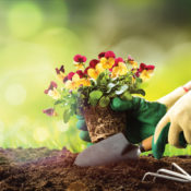 Gardener plainting flowers in soil