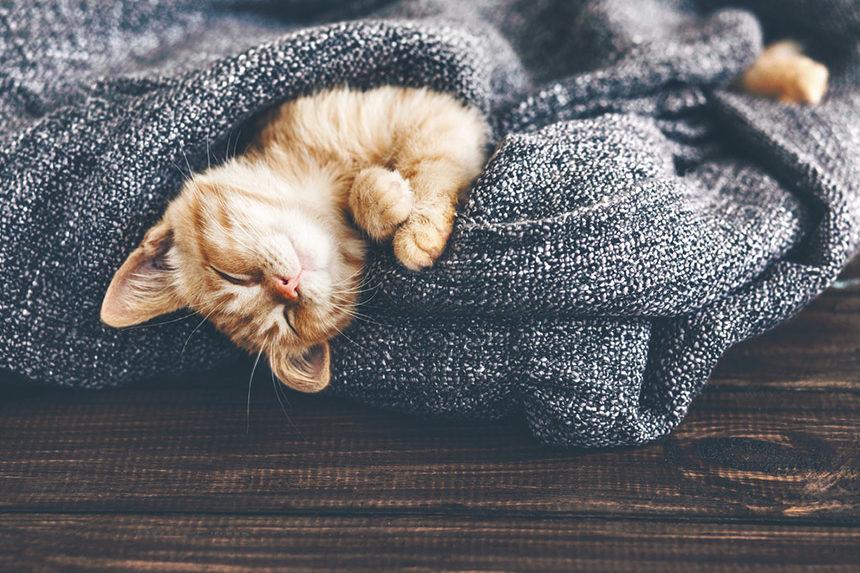 A orange tabby kitten sleeping in a warm blanket.