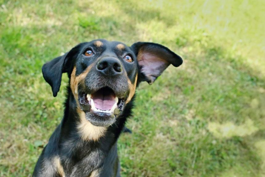Happy dog outside