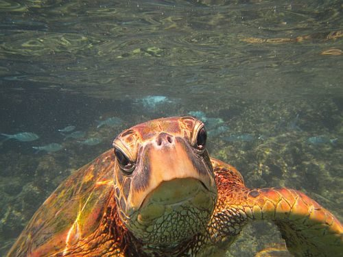 A close up of a turtle under water.