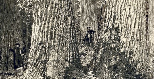 Man standing in front of a giant American Chestnut